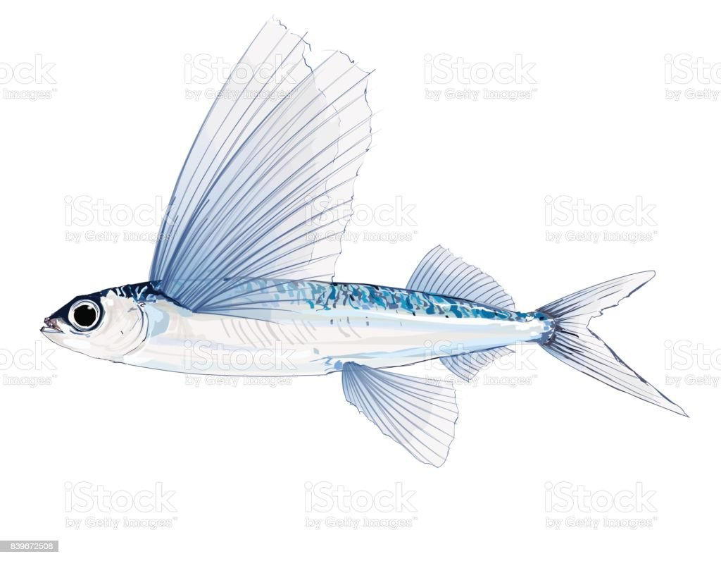 Flying Fish In Watercolor Stock Vector Art & More Images of Animal ...