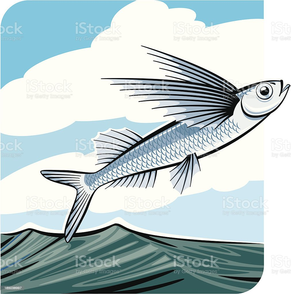 Flying Fish Stock Vector Art & More Images of Animal 165038997   iStock
