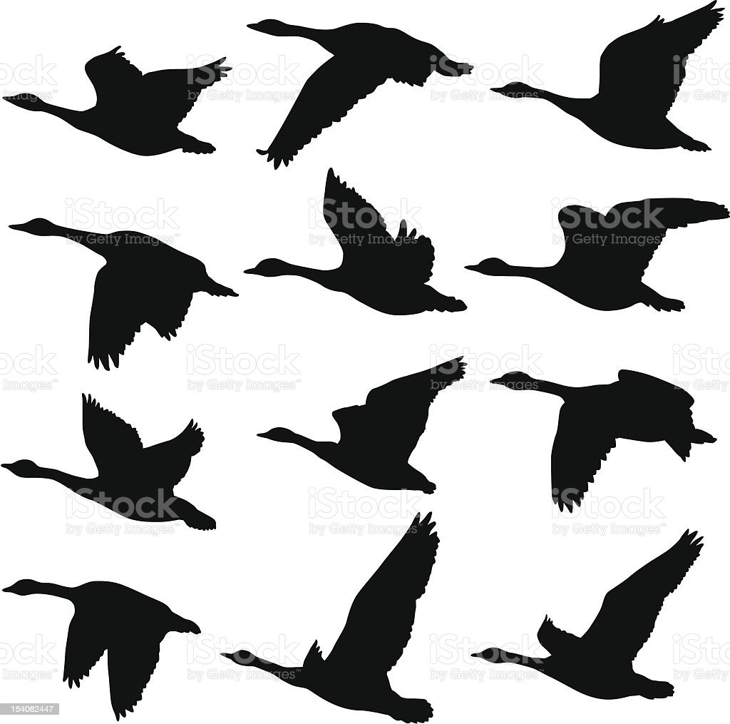 flying geese silhouettes royalty free stock vector art