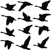 A collection of unique Canadian Goose silhouettes. 12 unique silhouettes