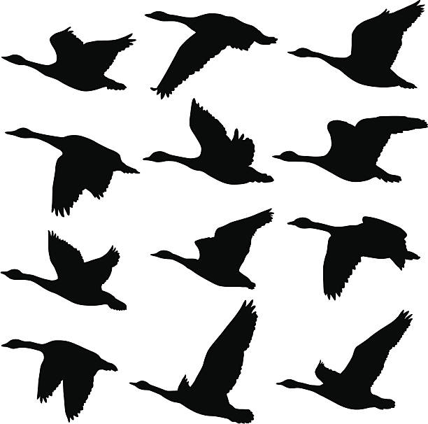 Flying Geese Silhouettes A collection of unique Canadian Goose silhouettes. 12 unique silhouettes canada goose stock illustrations