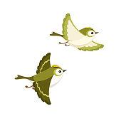 Flying Goldcrest pair (the smallest European bird) isolated on white background