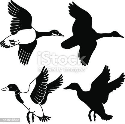 A vector illustration of a flying goose and duck in black and white and as a silhouette.