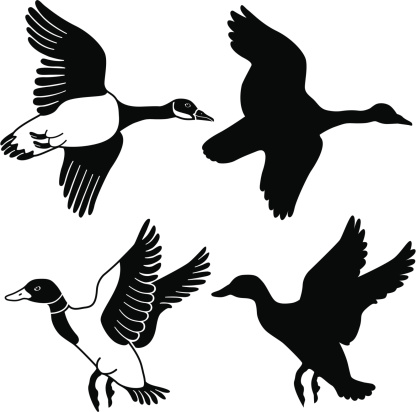 flying goose and duck