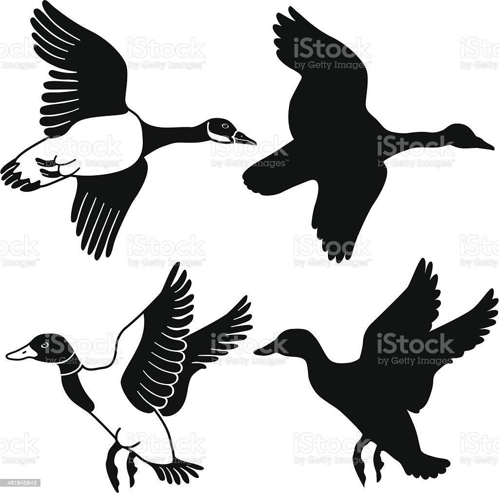 Volant de canard et d'oie - Illustration vectorielle