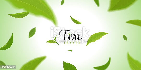Flying green tea leaves on green background template. Vector set of element for advertising, packaging design of tea products.