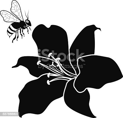 A vector illustration of a flying honey bee and lily flower in black and white. An EPS file and a large jpg are included in this download.