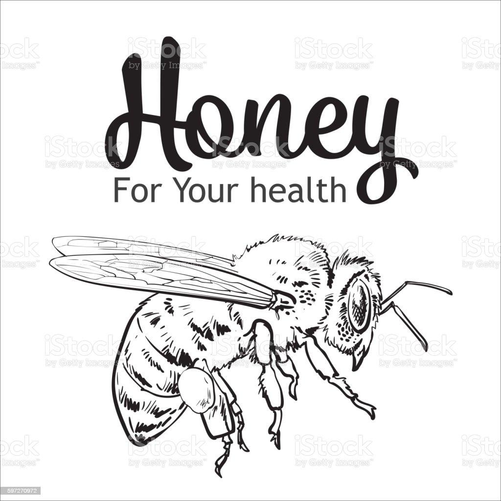 Flying honey bee isolated on white background Lizenzfreies flying honey bee isolated on white background stock vektor art und mehr bilder von apis