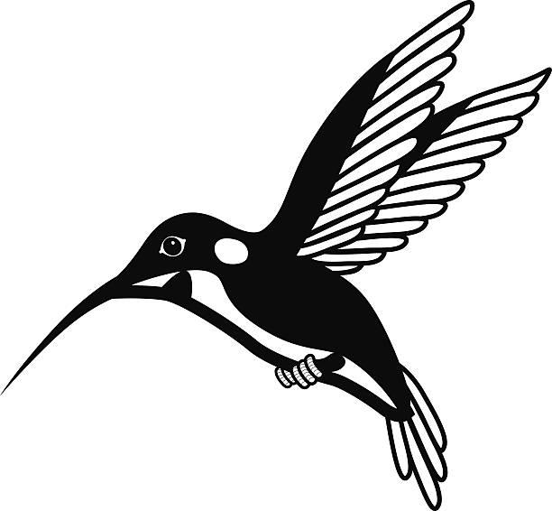 flying hummingbird in black and white vector art illustration