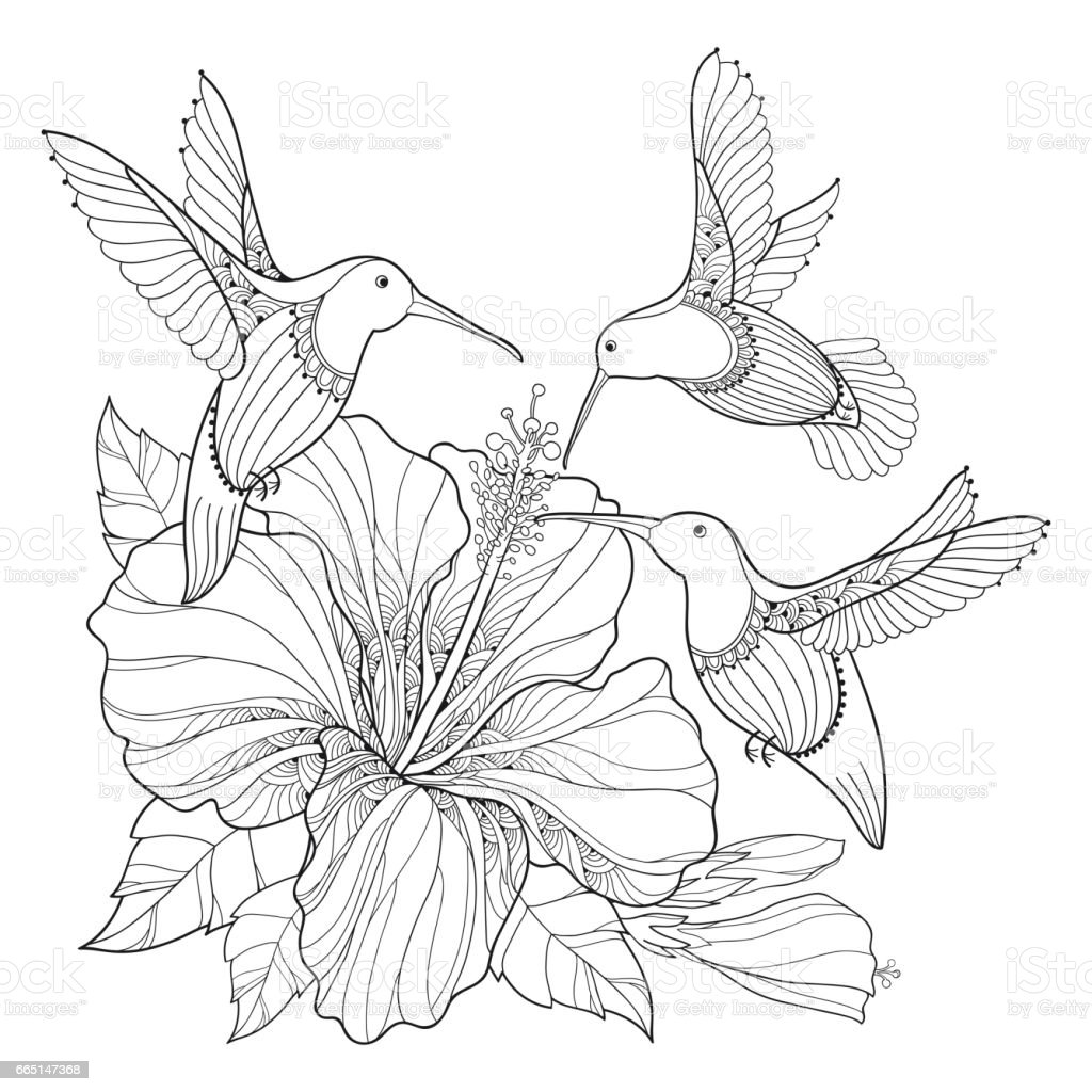 Flying hummingbird or colibri and hibiscus in contour style isolated on white cliparts - Dessin hibiscus ...
