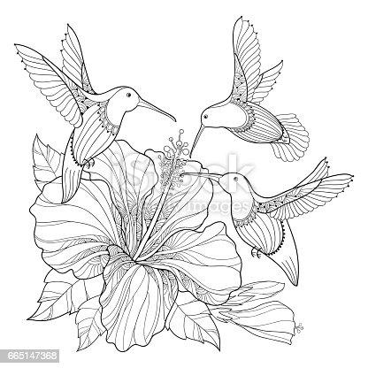 Ilustración de Flying Hummingbird Or Colibri And Hibiscus In Contour ...