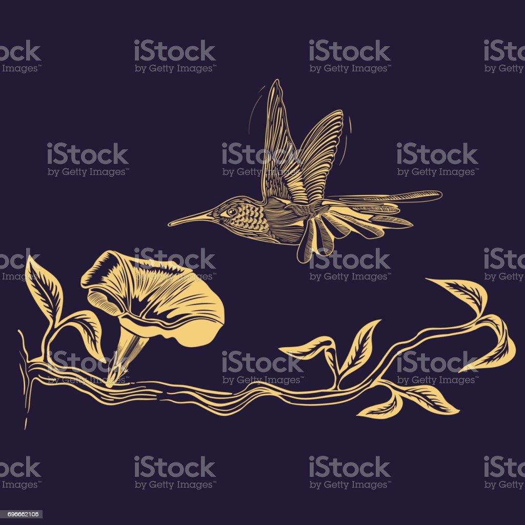 Flying Hummingbird vector drawing vector art illustration
