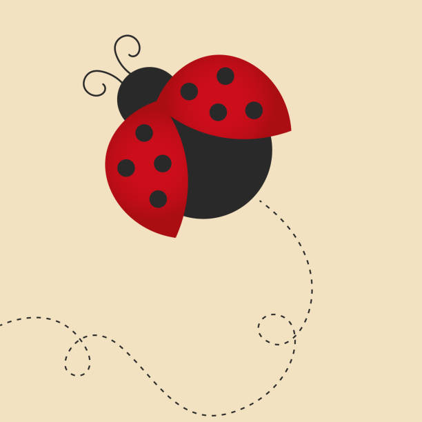 flying lady bug flying lady bug on beige background, dots on the wings, dark grey body fly insect stock illustrations