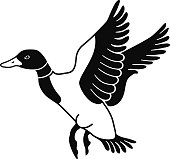 A vector illustration of a flying mallard duck in black and white. An EPS file and a large jpg are included in this download.