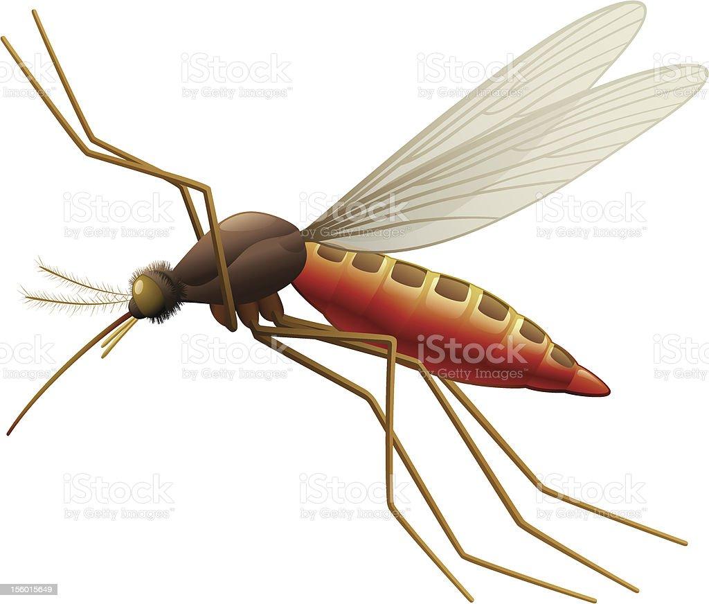 Flying Mosquito vector art illustration