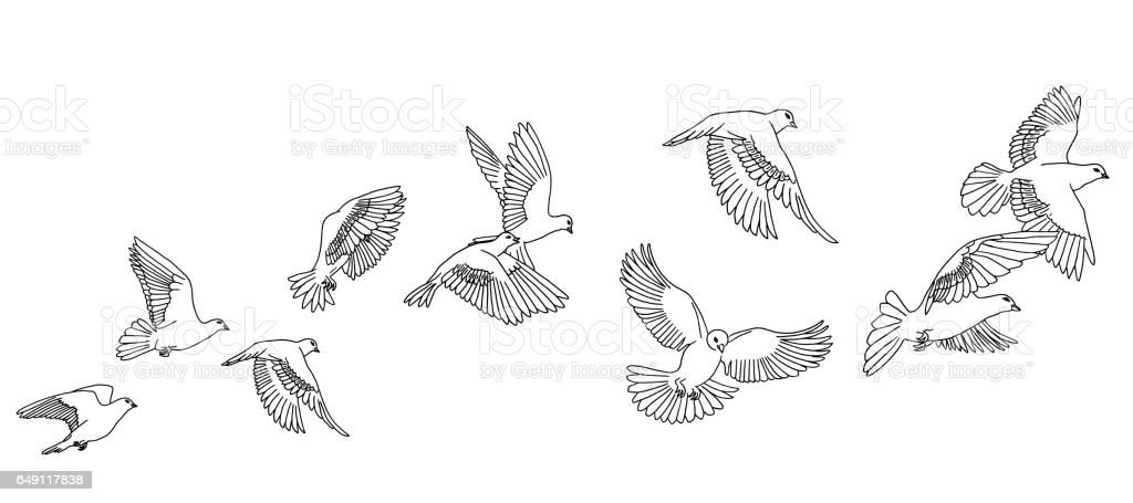 Flying pigeons banner vector art illustration