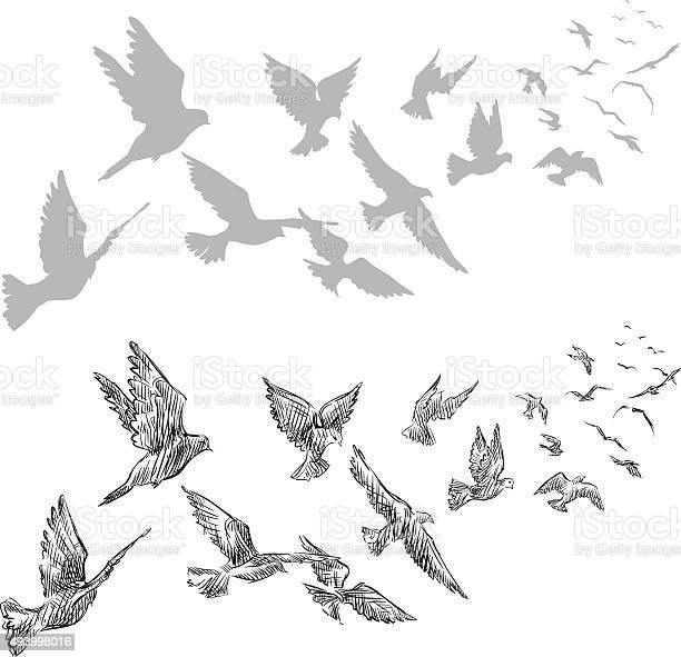 Flying pigeons hand drawn vector illustration vector id493998016?b=1&k=6&m=493998016&s=612x612&h=4ry8 czgmnxhfp3ibvbo9pkptu8bngadkk qfivrtyu=