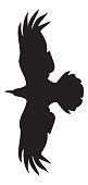 Flying raven silhouette