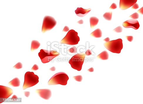 Flying red petals. Realistic beautiful roses petal set, concept of love and wedding, vector illustration drops elements of flowers on transparent background
