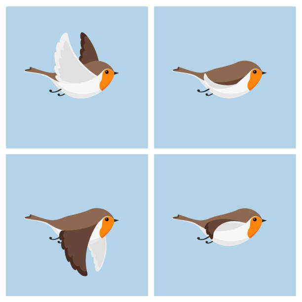 flying robin animation sprite sheet - birds stock illustrations