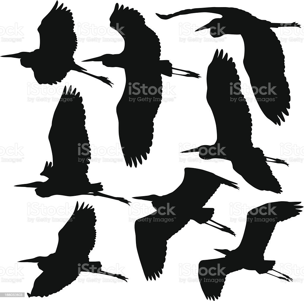 Flying Storks Cranes and Herons vector art illustration