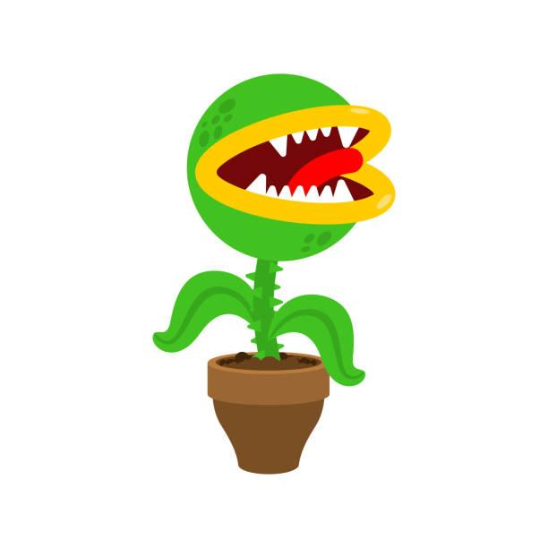 Flytrap in pot. Flower predator Carnivorous plant. Angry Flowers with Teeth Flytrap in pot. Flower predator Carnivorous plant. Angry Flowers with Teeth carnivorous stock illustrations