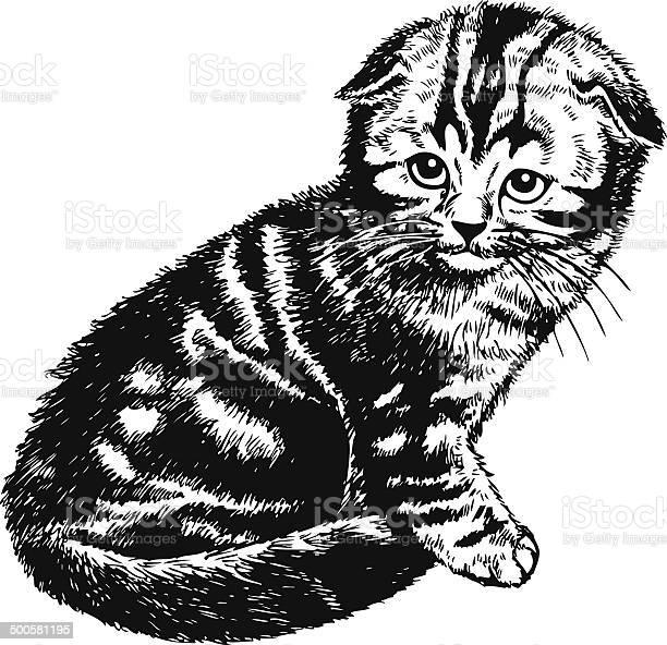 Fold kitten vector id500581195?b=1&k=6&m=500581195&s=612x612&h=vojvidza  0rjaqddhp enbcqwzvk iybwalzjwpw a=