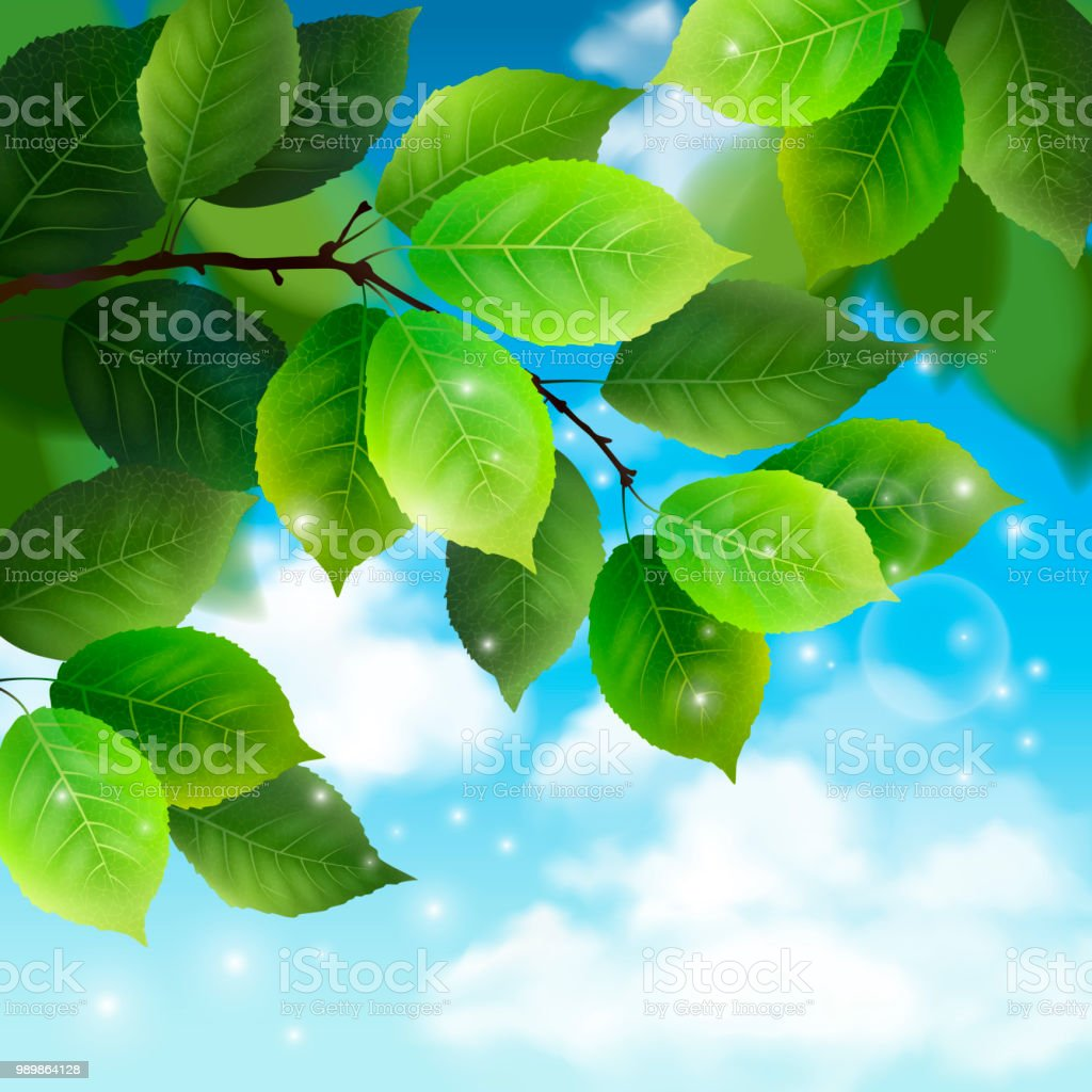 Foliage on sky background. Isolated green leaves. Realistic vector...