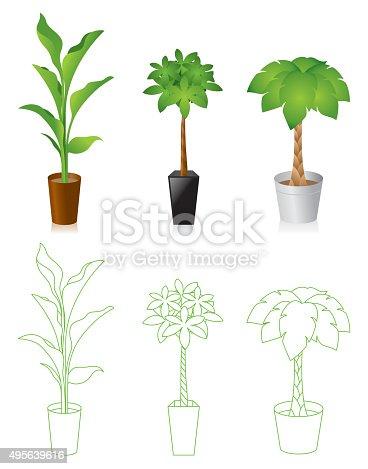 istock Foliage plant 495639616