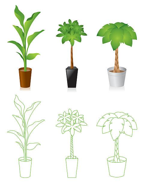 Foliage plant vector art illustration