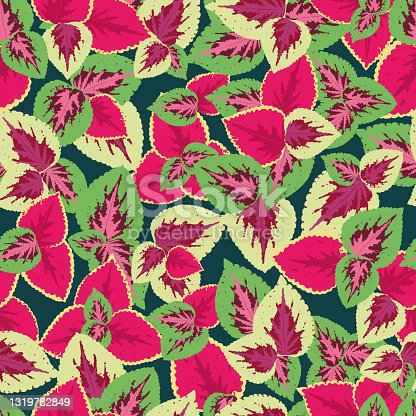 istock Foliage seamless pattern, leaves of coleus blume, pink and crimson. bright, juicy vector pattern 1319782849
