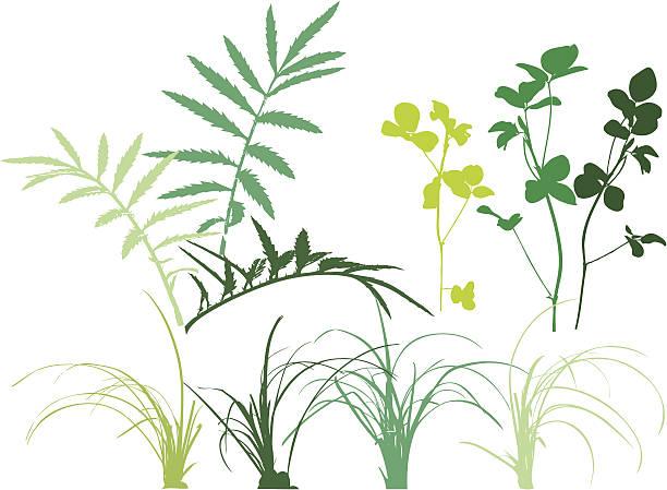 illustrazioni stock, clip art, cartoni animati e icone di tendenza di modelli folliage con piante, erba, foglie, erbe aromatiche. - erba medica