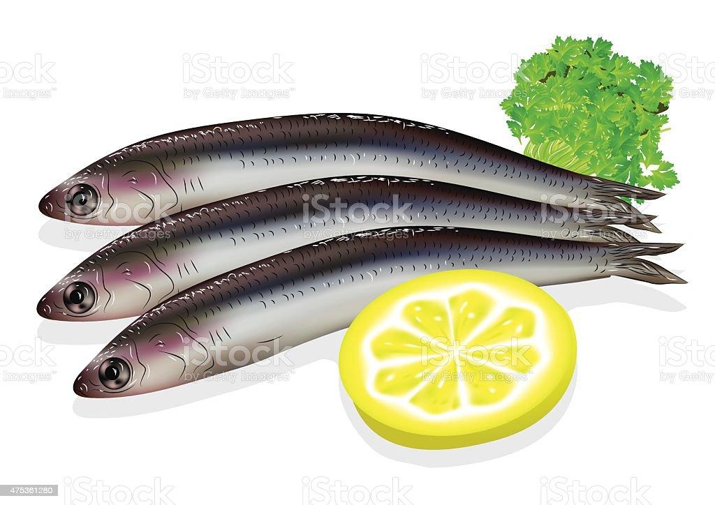 De la anchoa - ilustración de arte vectorial