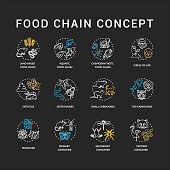 Food chain chalk RGB color concept icons set. Primary, secondary and tertiary consumers. Small and top carnivores. Life cycle idea. Vector isolated chalkboard illustrations on black background
