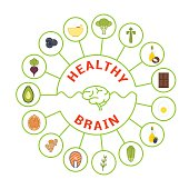 Vector foods that are good for brain