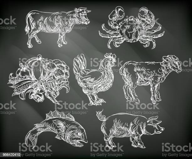 Food groups chalk hand drawn animal icons vector id956420410?b=1&k=6&m=956420410&s=612x612&h=ksple544 cc9j6k3zcj h2dayqelfjrsg9bv6vpg4te=