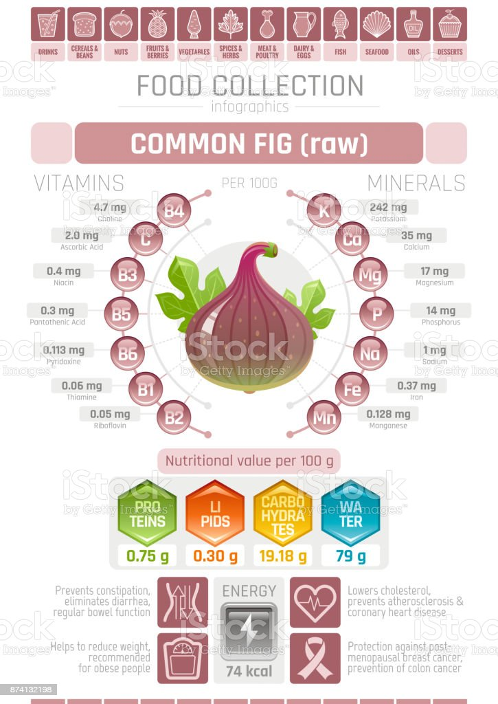 Food infographics poster, fig fruit vector illustration. Healthy eating icon set, diet design elements, vitamin mineral supplement chart, protein, lipid, carbohydrates, diagram flat flyer banner vector art illustration
