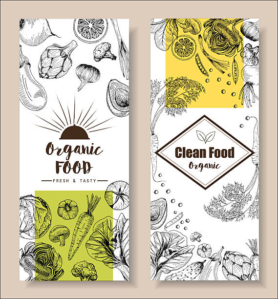 Food menu design vegetable organic healthy drawing element vector art illustration