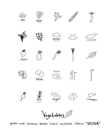 food menu illustrations