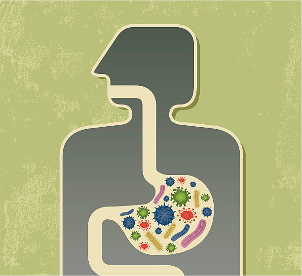 Food poisoning graphic with multicolored bacteria in stomach Virus in stomach. Zip contains AI and PDf formats. abdomen stock illustrations