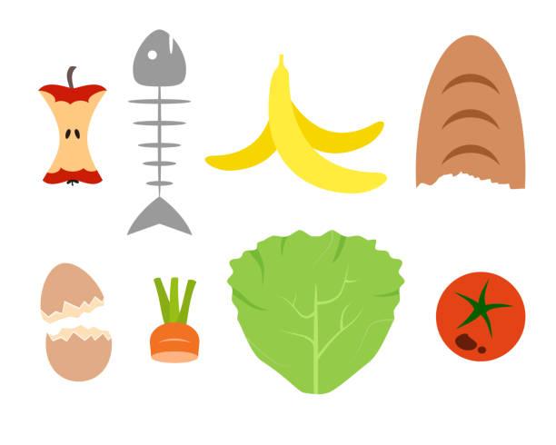 ilustraciones, imágenes clip art, dibujos animados e iconos de stock de restos de comida. reciclaje de residuos orgánicos. comer manzana, cáscara de plátano, cáscara de huevo, hueso de pescado, tomate, zanahoria, pan, ensalada. concepto de compost. aislado sobre fondo blanco. ilustración vectorial, estilo plano. - leftovers