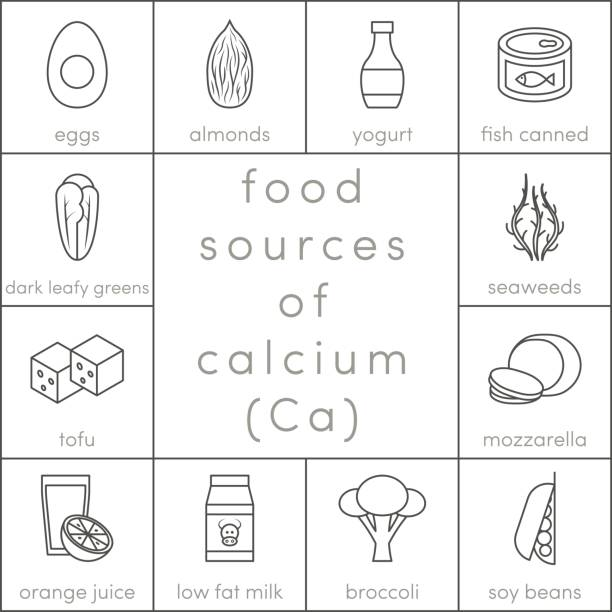 Food sources of calcium Food sources of calcium, vector outline food icons for infographic mozzarella stock illustrations
