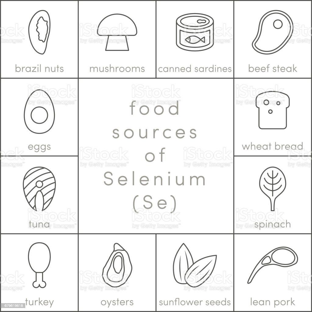 Food sources of selenium vector art illustration