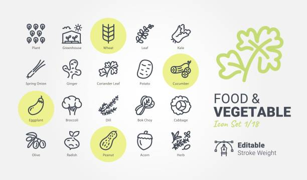 Food & Vegetable vector icons Food & Vegetable vector icons dill stock illustrations