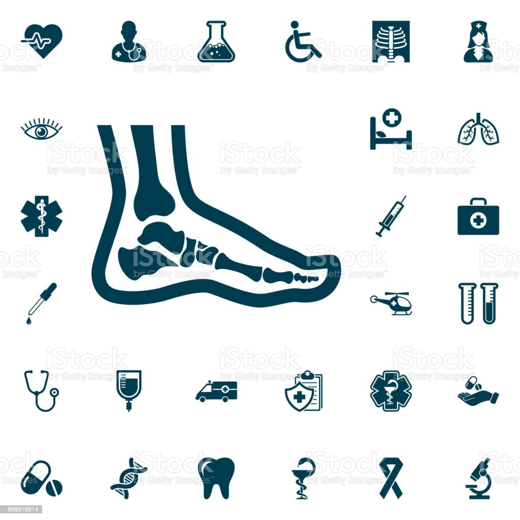 Foot anatomy. Single flat icon, medical set on white background. Vector illustration. vector art illustration