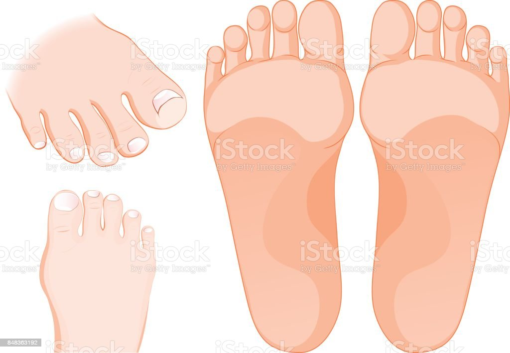 Foot care. Icons Set. Human body parts. vector art illustration