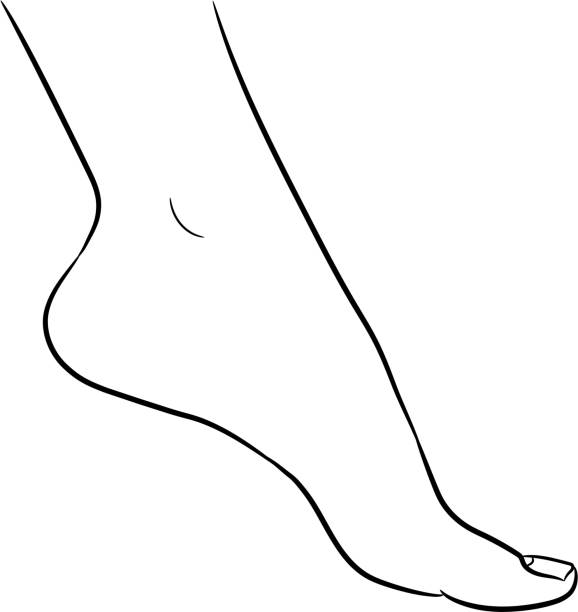 Foot female from the contour black brush lines on white background. Vector illustration. vector art illustration