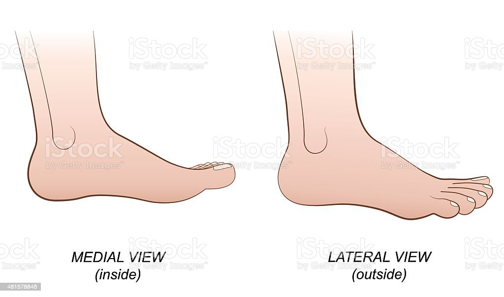 Foot Lateral Medial View Inside Outside Profile Stock Vector Art ...