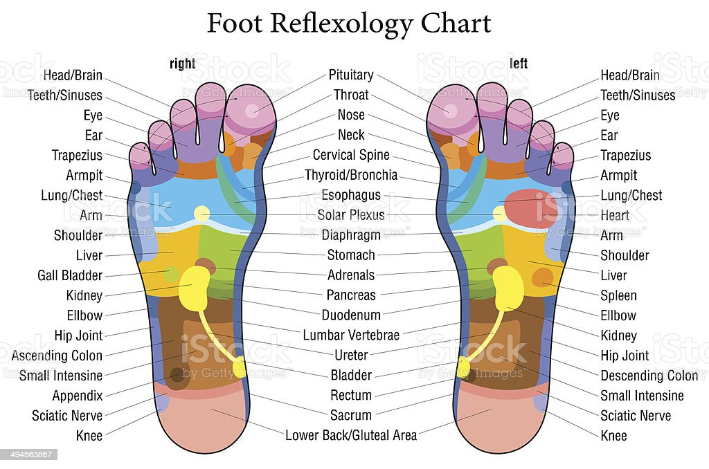 Foot reflexology chart description vector art illustration
