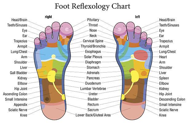 Royalty free foot massage clip art vector images illustrations